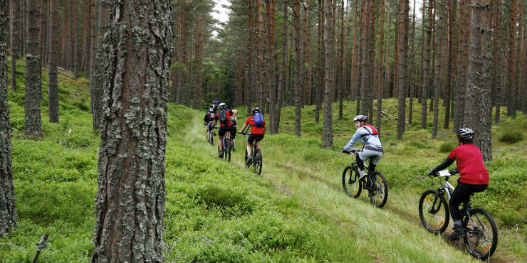 Been lookin' for a Mountain Bike Group Ride?